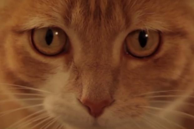 Vídeos mostram gatos enfrentando animais maiores e levando a melhor Reprodução, YouTube/