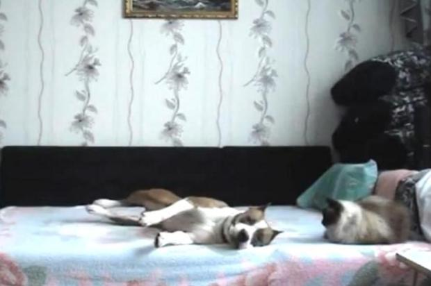 Câmera escondida mostra o que cachorro faz quando donos saem de casa Reprodução/YouTube