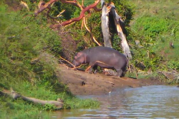 Site mostra vídeos ao vivo de animais ao redor do mundo Reprodução/Explore