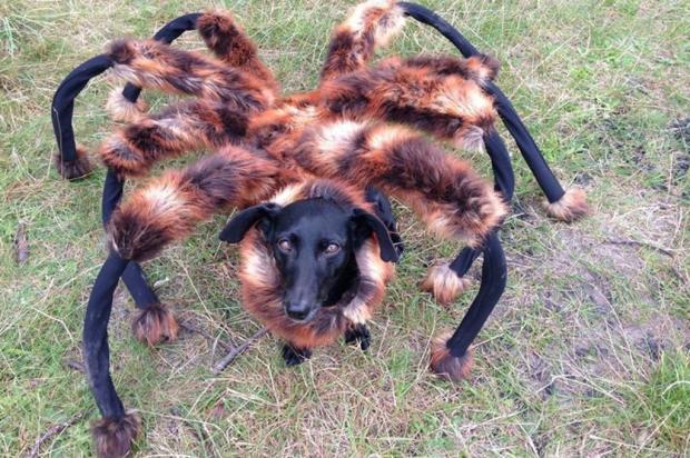 Vídeo: ''cachorro-aranha'' assusta pessoas e em apenas um dia já é hit na web Reprodução/Facebook