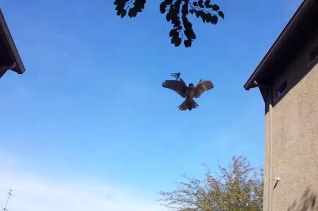 Vídeo mostra momento em que ave ataca gafanhoto, nos EUA YouTube/Reprodução